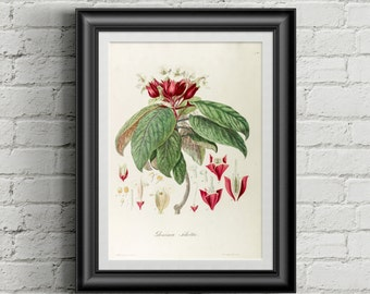 Botanical art print. Wall art print. Vintage botanical prints. Flower illustration print. Antique botanical print. Herb prints. Modern art.