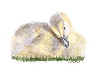 Baby Duck Print - Woodland Nursery Art - Duckling Watercolor - Duck Art - Nursery Print - Baby Duckling - Baby Boy - Girl Art - Duck Nursery