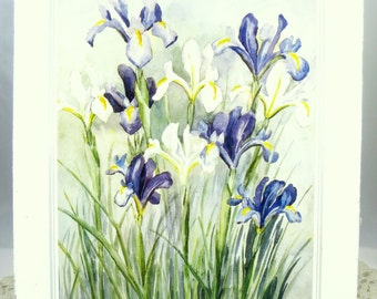 Iris Watercolor 6 x 8 print, blue and white irises, ready to frame, B.M.Cheeseman, wall art, home decor