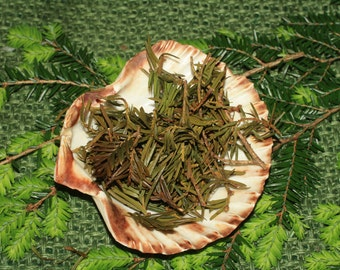 English Yew Leaves for the Dark Goddess Work  - Spellwork or Charms - Pagan, Wicca, Witchcraft