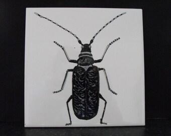Ceramic Tile Painting. Original. Black Longhorn beetle bug creepie crawley insect plaque