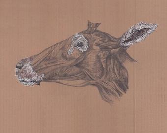 "Anatomical Deer Giclee Print, ""Fanny"""