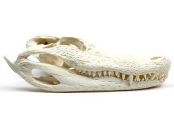 "Taxidermy Animal Head   Real Alligator Skull 9-11"""