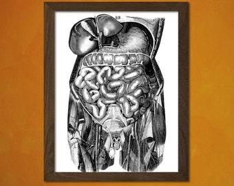 Anatomy Poster -  Medical Decor Human Anatomical Vintage Retro Wall Decor Office decoration Organs Bones Medicine Intestinst