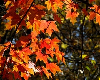 Red maple leaves with blue sky peeping through