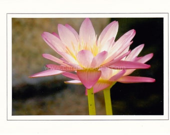 Pink Water Lilly Photo Greeting Card, 5x7 Note card, Original Photography, All Occasion Note Card #48