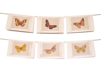 Butterfly Stationery Orange Shades - Set of 6 cards - 5-1/2 x 8-1/2 - Envelopes Included