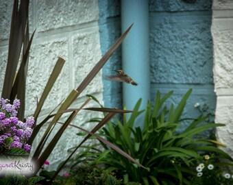 Hummingbird Flying - flowers bird fly photography