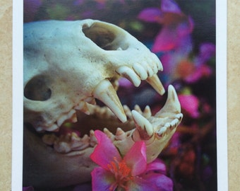Photo Prints - Badger Skull Side View - Photography Art Prints Floral