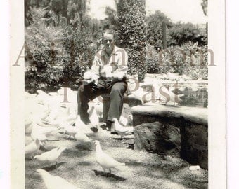 Vintage Photo Man Feeding Pigeons Are 2 Birds In The Hand Worth 4 In The Bush?