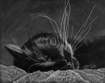 Black and white cat pencil drawing giclee print signed by Maine artist Jessie Perkins