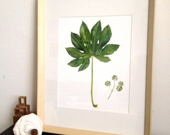Fatsia Japonica/ Prospect Avenue and Rodney Drive (Watercolor Art Print)