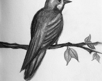 Bird Charcoal and Pencil Drawing/ Wall Art/ Nursery Art/ Nature/ Animal