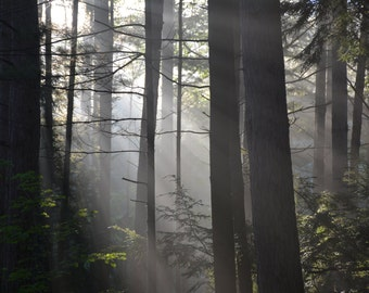 Foggy morning forest