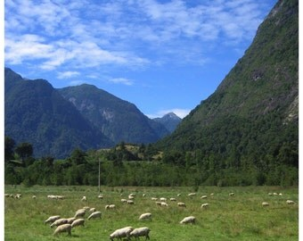 Sheep gracing in the Andes Mountains, Chile