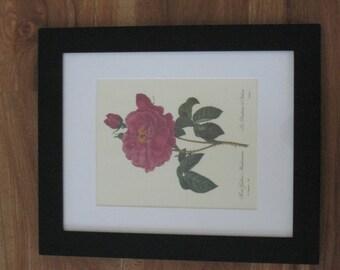 Botanial Print