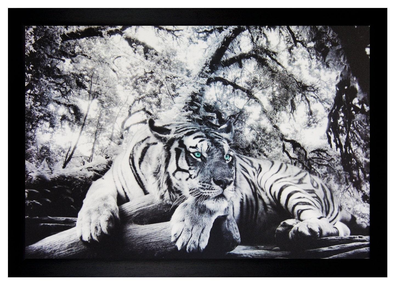 Green tiger eyes - photo#51