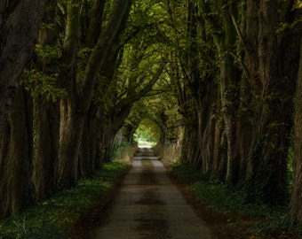Trees, landscape photography, landscape, landscape art