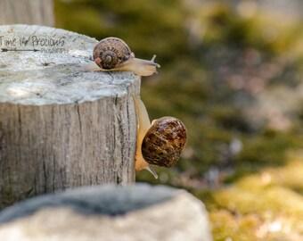 Snail Photography,Nature Photography,Snail Print,Mother & Child,Nursery Print,Nature Art,UNFRAMED,Art Prints,Bathroom Print,Wall Hanging,