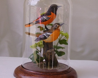 """Baltimore (Northern) Oriole hand-painted sculpture in 8""""  glass dome"""
