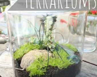 Handmade Terrariums