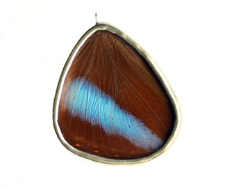 Real Butterfly Wing Necklace Morpho Helenor Hind Wing Blue Banded