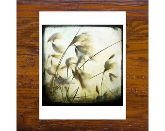 8x8 Print [JCP-005] - Cotton Grass