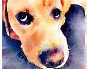 "Labrador Dog -- Digial Print 6"" x 8"" purple yellow pup eyes"