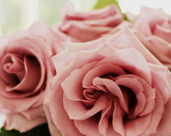 Elegant Sterling Roses - Pink Roses - Romantic Roses - Floral Still Life Photograph - Original Colour Photograph by Suzanne MacCrone Rogers