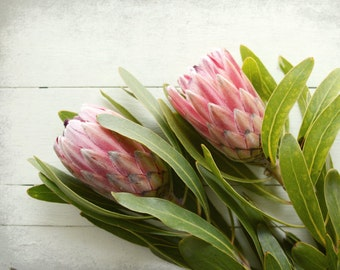 "Tropical flowers - pale pink - pastel floral - botanical wall art - green leaves - flower still life  ""Protea Two"""