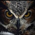 owlatthemoon