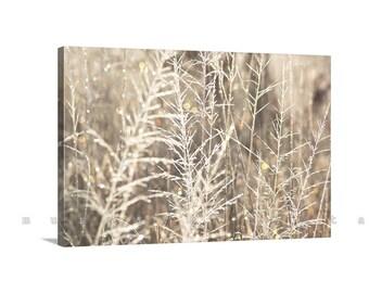 Canvas Nature Photography, Bokeh, Grassy, Pale Gold, Frosty, Fine Art Photography, Ready to Hang, MurrayBolesta, Arivaca, 11 x 17, 16 x 24