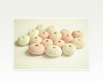 SALE 25% OFF Seashell Photography, Sea Urchin, Minimalist Summer Decor, Pink and Cream Pastel Bathroom Art - Cluster