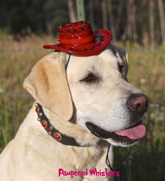 "Cowboy hat for dogs (16-24"" collar size)"