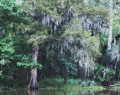 "Louisiana ""Bayou #1"" Photograph. Affordable Home Decor. Swamp Print, Spanish Moss Cypress Photography. 8x10, 11x14, 16x20, 20x24, 24x30+"