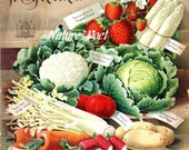 Victorian Seed Catalog. Reproduction Cover 1898 Downloadable, Printable, Digital Art Image, Kitchen Decor, Supplies