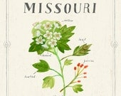 Missouri State Flower Print, The Hawthorn