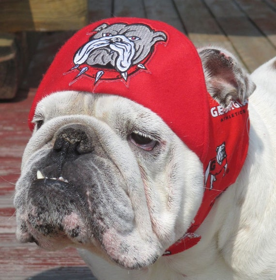 UGA hat for English Bulldog- Funny Dog Hat- English Bulldog Embroidered spike collar bulldog UGA Dawgs hat red and white