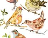 birds print archival giclee watercolor 5 birds illustration painting art eeliethel paper scandinavian nordic woodland