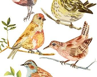 birds print archival giclee watercolor 5 birds woodland illustration painting art eeliethel paper scandinavian nordic woodland