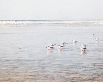 "Seabirds Photograph, Coastal Seascape, Ocean Landscape, Blue Brown White Beach Decor, Beach Photography,  ""Coastal Seabirds"""