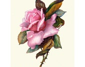 Rose Greeting Card | Vintage Victorian Style | Pink Roses