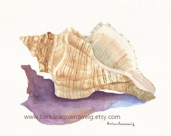 Seashell Painting, Conch Shell Art Print, Shell Watercolor Art, Beach House Decor, Barbara Rosenzweig, Coastal Decor, Seashore Wall Art Gift