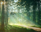 Forest landscape print, inspirational dramatic sunbeams, charming woodland path, soothing blue green wall decor for lodge, home, or office