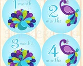 Baby Month Stickers Plus FREE Gift Girl Monthly Milestone Stickers Peacock Blue Purple Green Bird PRECUT Baby Age Stickers Nursery Decor