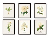 White Botanical Print Set No. 4 - Botanical Print - Giclee Canvas Art Print - Antique Botanical Prints - Posters - White Flowers - Wall Art
