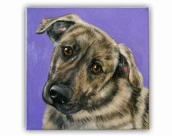 "Custom Dog Portrait / Custom Pet Portrait 1 Pet Solid background (10x10x0.75"") Original Painting on Canvas Miniature Pinscher Min Pin"