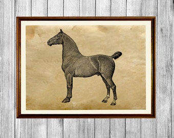 Horse print Rustic home decor Animal art poster AK574