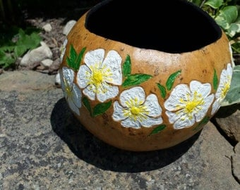 Cherokee Rose Gourd