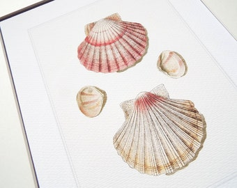 Dusty Pink Scallop Shell Study 1 Archival Print on Watercolor Paper